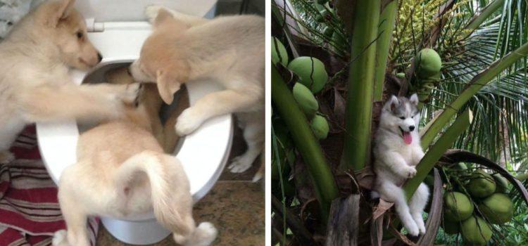 Diese lustigen Bilder von merkwürdig agierenden Hunden werden deinen Tag versüßen!