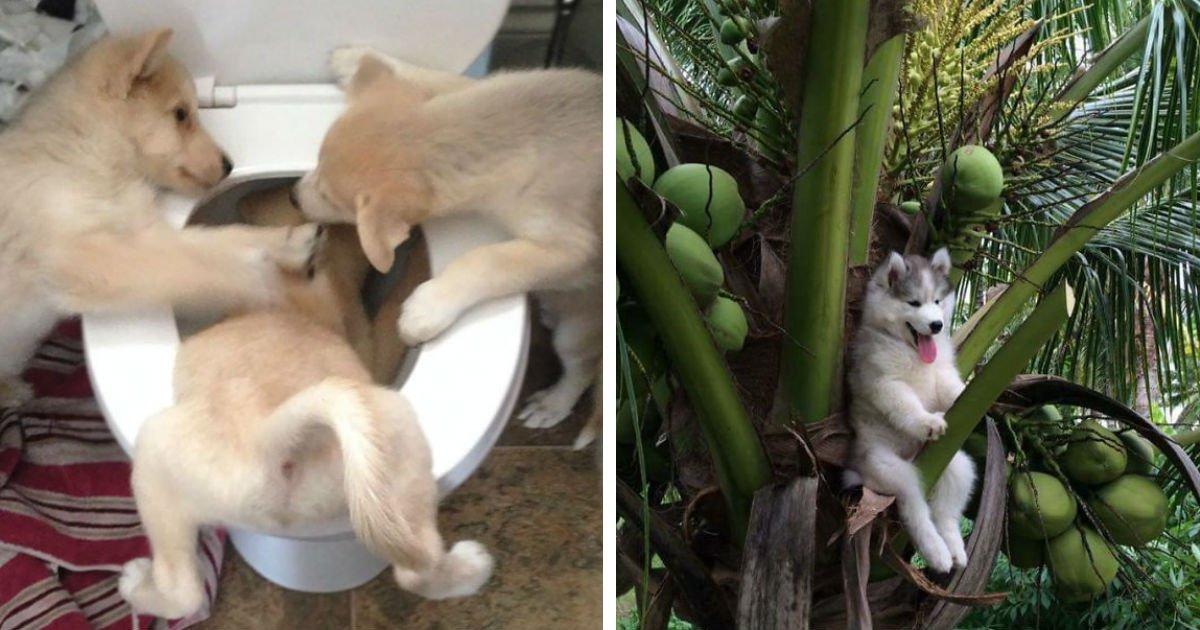 Photo of Diese lustigen Bilder von merkwürdig agierenden Hunden werden deinen Tag versüßen!