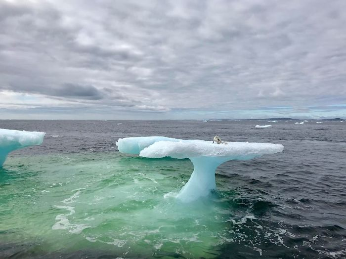 Photo of Estos pescadores creyeron ver una foca sobre un iceberg, hasta que miraron más de cerca