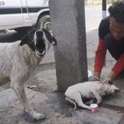 Angustiada Por Su Cachorro, Perrita Suplica Por Ayuda a las Personas VIDEO