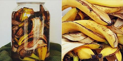 Photo of Aprende hacer un Potente Fertilizante a base de Cascara de Banana.Para tus hermosas plantas