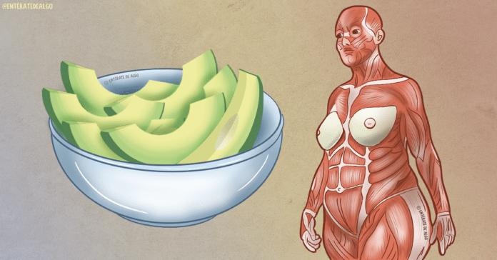 Photo of Mira lo que sucede en tu cuerpo cuando comes un aguacate entero todos los días