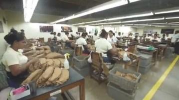 Photo of República Dominicana exporta 7 mil millones de cigarros a máquina cada año