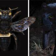 Animales que se creían extintos están apareciendo en el planeta.