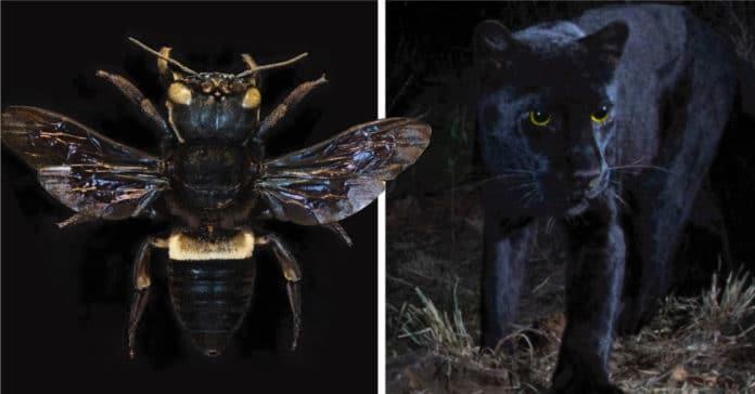 Photo of Animales que se creían extintos están apareciendo en el planeta.