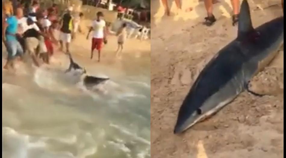 Photo of ¿Qué opinas del tiburón que sacaron de la Playa de Sosúa?