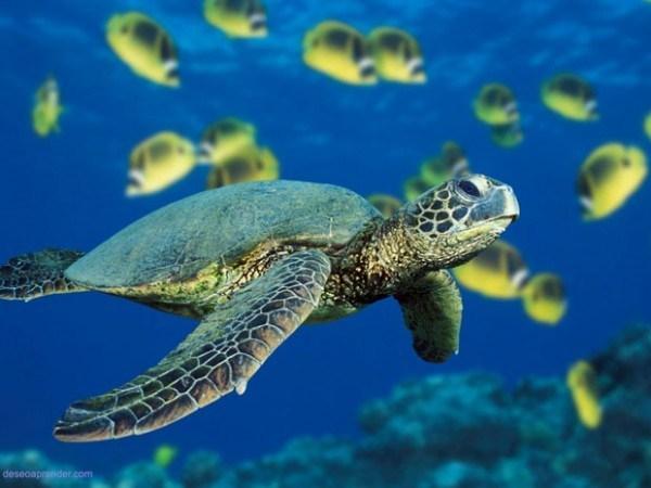 """Photo of Conozca la """"lista roja"""" de especies de fauna dominicana en peligro de extinción"""