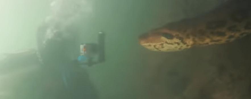 buzos se topan con una anaconda gigante