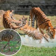Nuevos integrantes del Zoológico Nacional