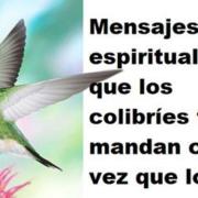 ¿Ves muy seguido colibríes? Estos son los mensajes espirituales que traen para ti
