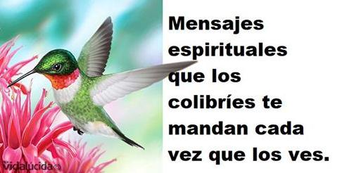 Photo of ¿Ves muy seguido colibríes? Estos son los mensajes espirituales que traen para ti