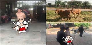 Condenan a Cadena Perpetua Hombre por Violar mas de 80 Vacas