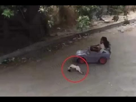 Photo of Habla la carajita que atropelló al gato con su carrito
