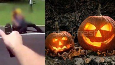 Photo of Pandillero baleado entre niños pedían dulces Halloween en lcalles de New York; Balacera dejó agujeros en ventanas lavandería y pizzería