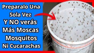 Photo of Tu casa, 1 hora después NO verás NUNCA mas Mosca, Mosquito o Cucaracha