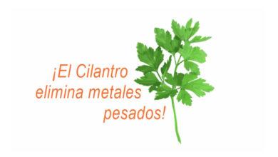 Photo of El cilantro elimina metales pesados de tu cuerpo