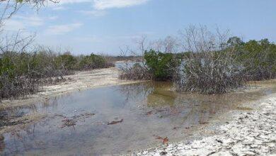 Photo of Solicitan intervención de Medio Ambiente frente a acelerada sequía de playa Estero Balsa
