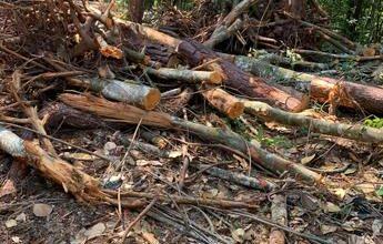Photo of Arrestan a varias personas por tala de árboles en Jarabacoa